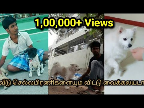 Tamil dubsmash with dogs||dog lovers||Pet lovers