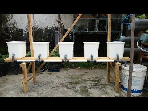 Panduan Membuat Sistem Hidroponik Dutch Bucket Dari Awal Sampai Siap Digunakan