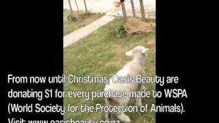 Oasis Beauty rescue lamb update Thumbnail