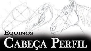 Equinos Cabeça Perfil - Esboço, Crânio e Contorno - Anatomia de Animais (Cavalo)