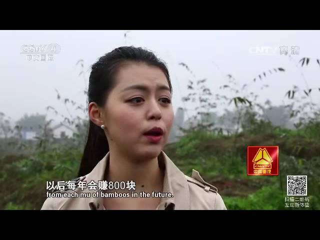 竹子也有大作为  【走遍中国  20160610】