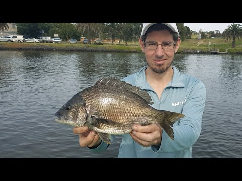 HOW To CATCH BREAM On BAIT Fishing With WORMS - Basic Fishing Tips For Beginners
