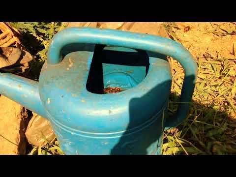 Kỹ thuật nuôi ong mật-  bẫy ong đất