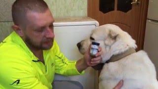 Трансфер Фактор для Живтоных. Опухоль на лапе у собаки.