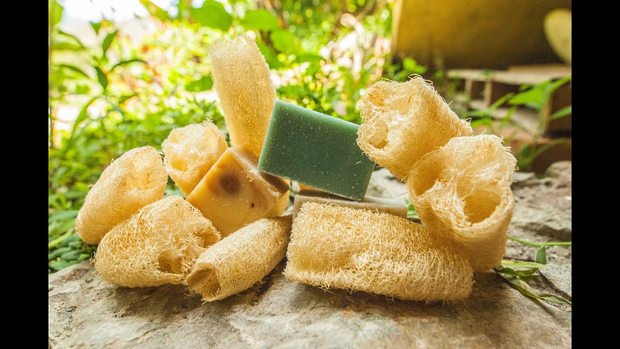 Grow Your Own Natural Sponge Luffa Valhalla Movement