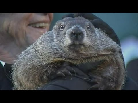Groundhog Day in the USA