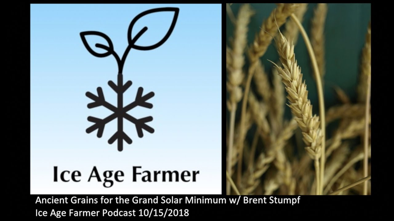 Ancient Grains For The Grand Solar Minimum With Brent Stumph Iafp E036 Ice Age Farmer