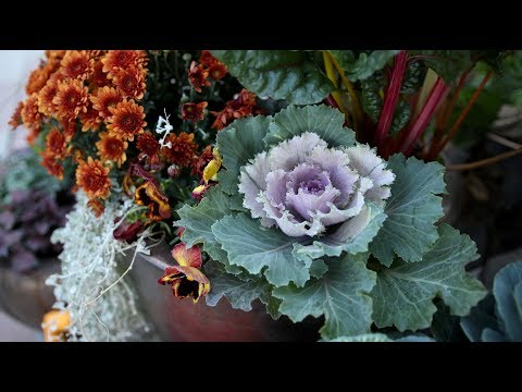 planting fall containers pt 1 garden answer - Garden Answer