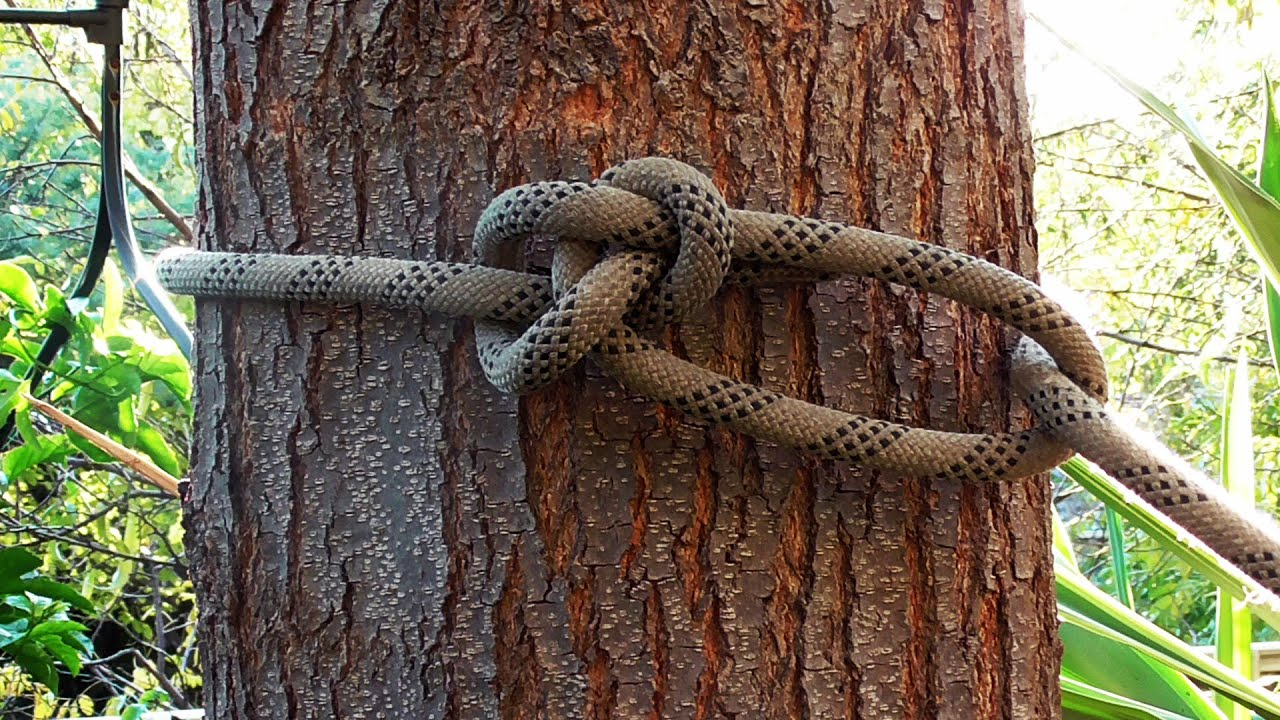 arborist knots how to tie the running bowline knotRunning Bowline Knot Diagram Running Bowline #12