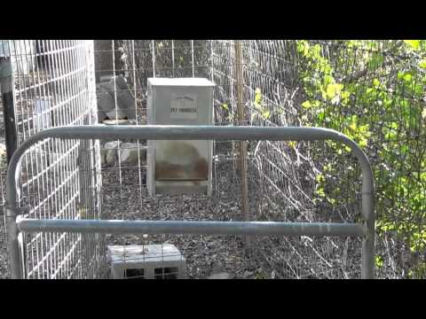 Auto Feed System for Livestock Guard Dogs - LGD - Dog Feeder