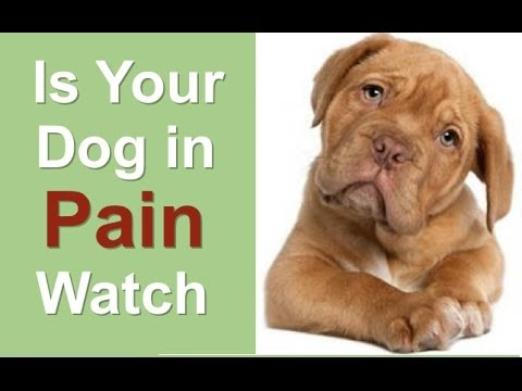 What Can You Give Dog For Pain