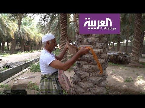 صباح العربية | استثناء المزارعين من قرار منع التجول في السعودية  - نشر قبل 8 ساعة
