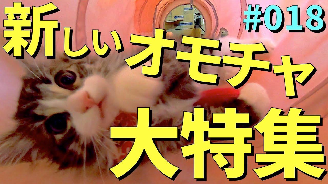 子猫に新しいオモチャを買ったらハマりすぎて大変なことに!?キャットトンネルスパイラル・キャッチミーイフユーキャン・ファーミネーターを紹介♪【ぽん太のいる生活】【ノルウェージャンフォレストキャット】
