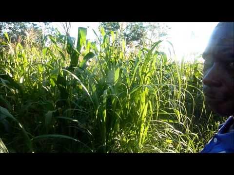 Tanzania Organic Farm