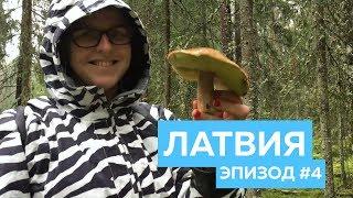 Латвия. Грибы и озеро
