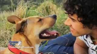 Doggy Dans Online Dog Trainer: Video Membership From Top Dog Trainer