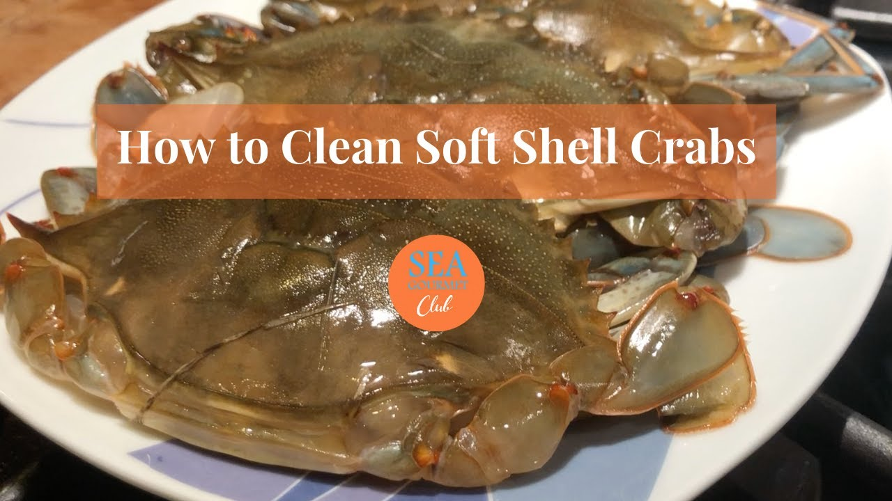 How to clean soft Shell Crabs