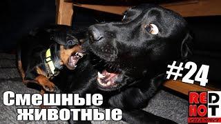 Смешные животные 24 Видео приколы с животными 2018
