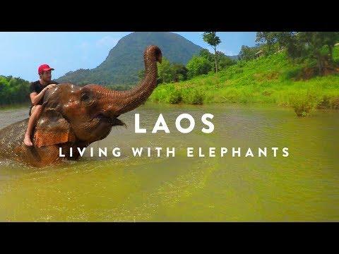 LIVING WITH ELEPHANTS   Laos   DJI Mavic Go Pro Karma Grip HD