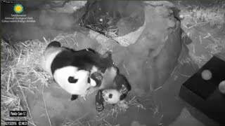 2-15-2016 Bei Bei Tangles & Dangles with Mei In the Middle of the Night