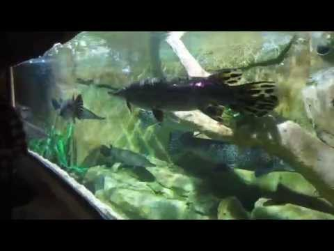 Video bể cá cảnh siêu đẹp nhất tại Việt Nam