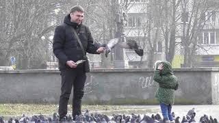 голуби Червоноград 15 лютого 2019