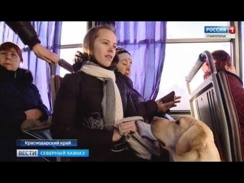 В Краснодаре водитель не пустил в автобус незрячую девушку