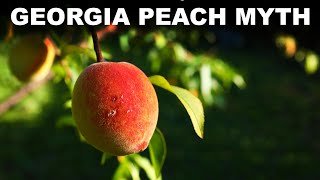 How the South tried to redefine itself with peaches