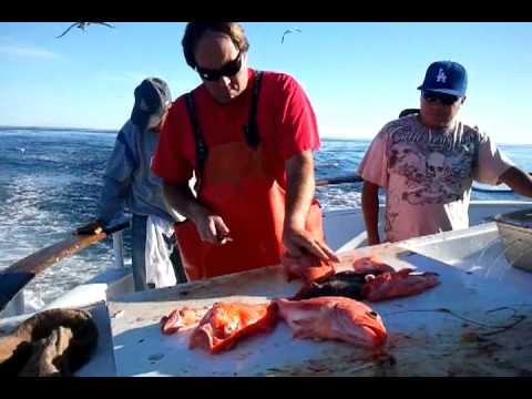 Overnight reds lingcod sheephead fishing channel isl for Channel islands fishing