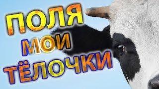 ПОЛЯ ИЗ ДЕРЕВКИ   МОИ ТЁЛОЧКИ   КОРОВУШКИ   Polya ZDerevki