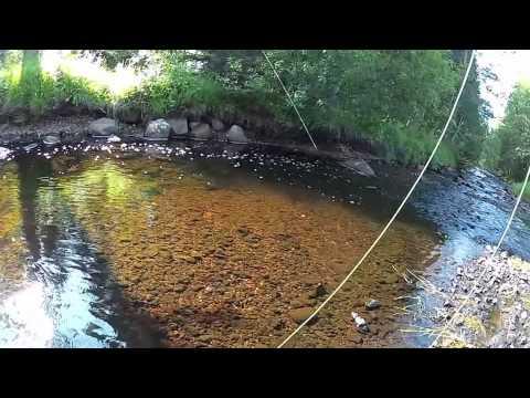 Mixat fiske från 2013! Fishing compilation 2013!