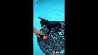 cutest animals in the world 14 dogs love swimming compilation 2018 WULdk HxCzo 360p