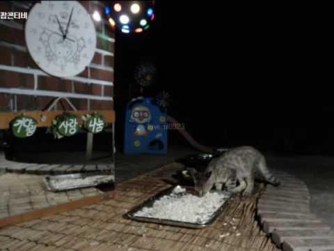 Cats Meok Bang : Stray Cats in South Korea [팝콘티비 BJ도둑고양이 나비월드] 160820 쪼꼬주니어 오후11시