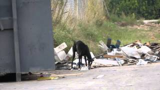 Galga Gives Birth In The Streets, She's Desperate And Alone...