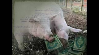 cochon.wmv