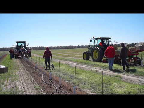 Planting Technology IPS Drive  Tree Pflanztechnik IPS Drive  - Made in Germany