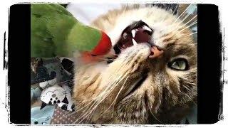ОЧЕНЬ СМЕШНЫЕ ПТИЦЫ, приколы с птицами | Funny Birds #646