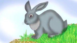 Заяц рассказываем о животных и рисуем карандашом