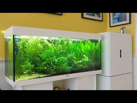 Juwel Rio 240 Planted Aquarium - Low Tech Planted Aquarium