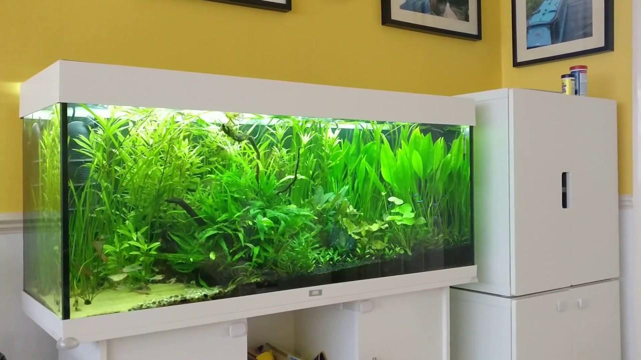Berühmt Juwel Rio 240 Planted Aquarium - Low Tech Planted Aquarium - YouTube GM82
