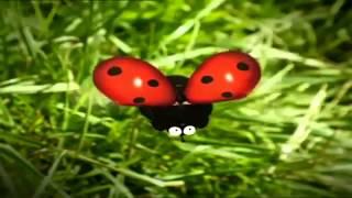 Букашки  божья коровка дразнит мух(странновато... все мульты с букахами делятся кроме этого..., 2014-07-01T00:37:30.000Z)