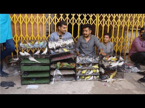 Birds Market Lalukhet Sunday Video Latest Update 11-4-21 In Urdu/Hindi.