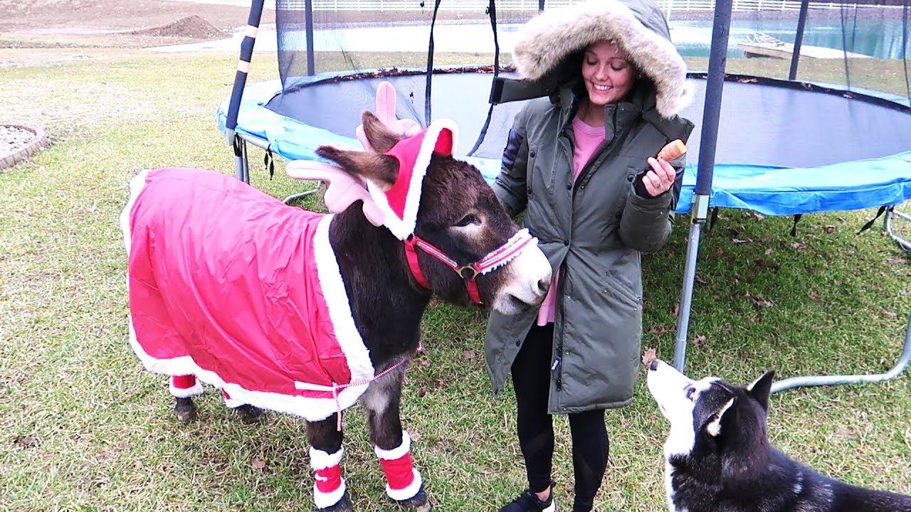 her-new-reindeer
