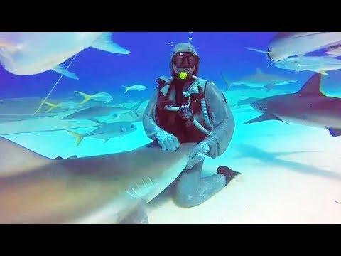 Elle a une relation spéciale avec un requin - ZAPPING SAUVAGE