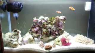 5 Gallon Fluval Spec Reef Nano Tank