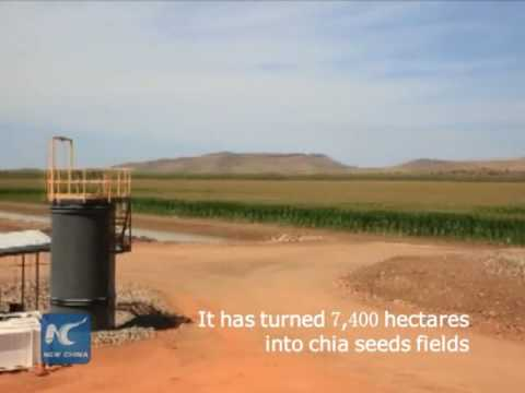 Chinese company turns wild land in western Australia into farmland
