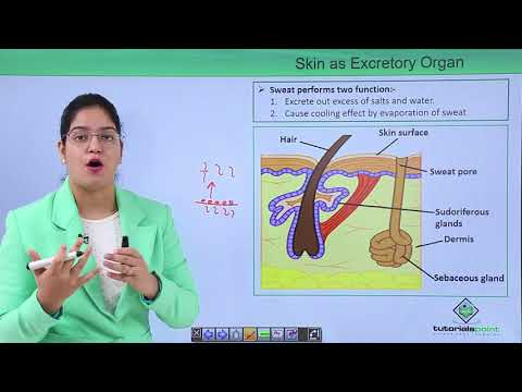 Excretory System - Accessory Excretory Organs