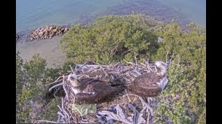 Preview of stream The Bay Sarasota - Osprey Camera