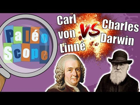 Linné VS Darwin ! La classification du vivant #1 Paléo Scope #4