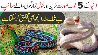 Five Most Beautiful Snakes in the World | Asif Ali TV |